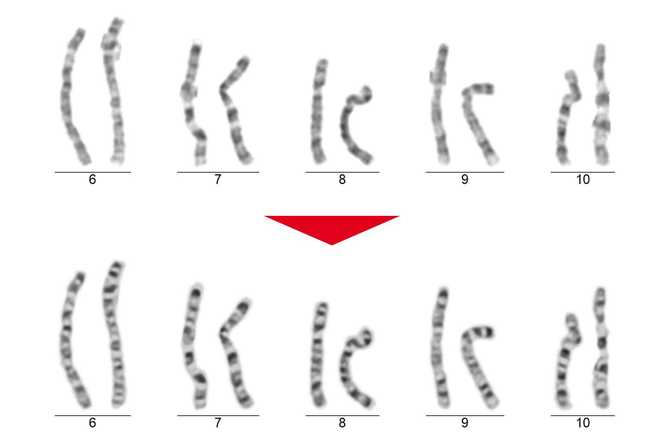 Chromosome beautifier image